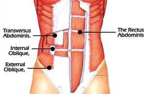 Back Braces for lower back pain - transverse abdominis