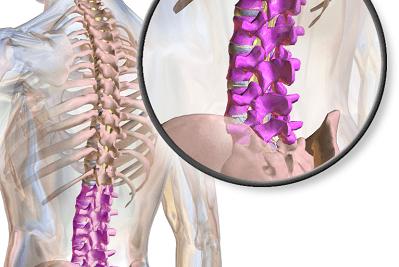 Best sciatica stretches, image of lumbar spine