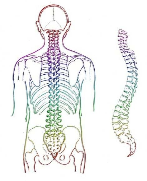 Thoracic spine mobility exercises - spine image