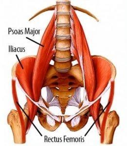psoas and posterior pelvic tilt