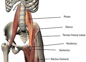 tight hip flexors and anterior pelvic tilt