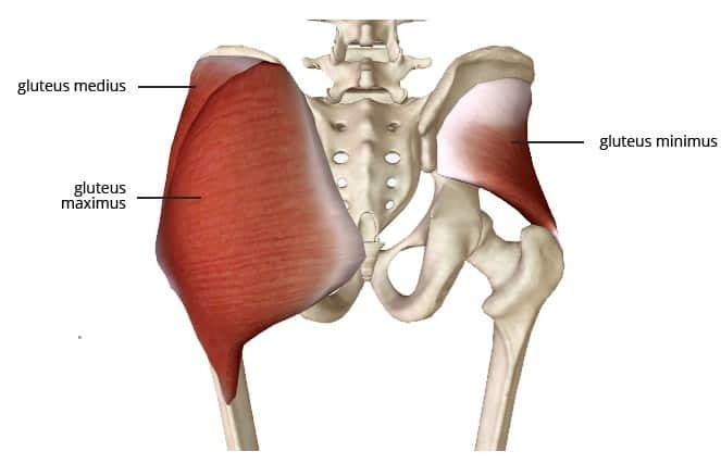 weak glutes anterior pelvic tilt