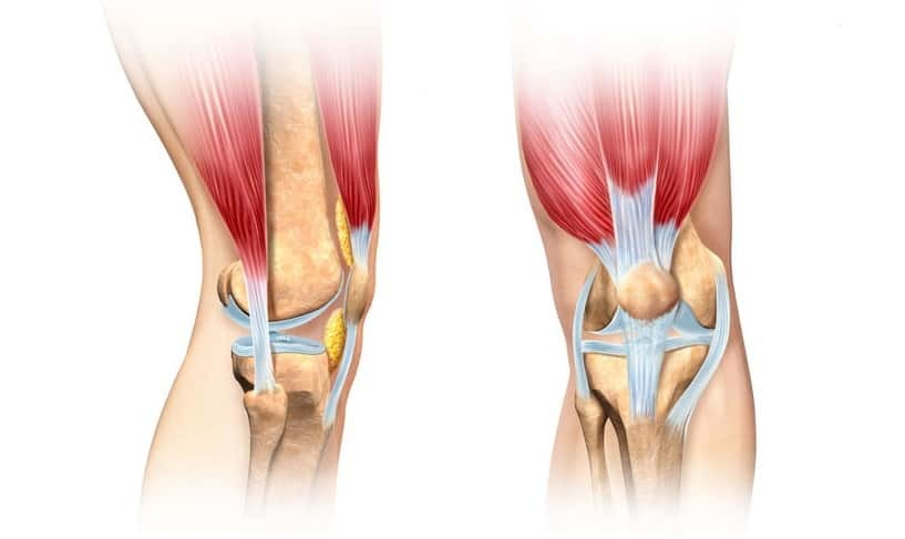 patellar tracking disorder - human knee