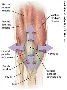 patellar tracking disorder - leg anatomy