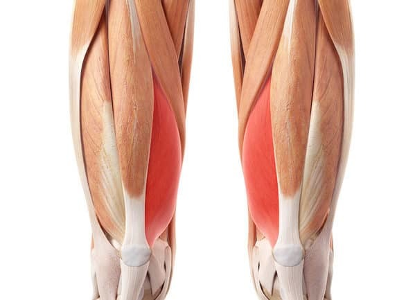 patellofemoral pain syndrome exercises - vastus medialis