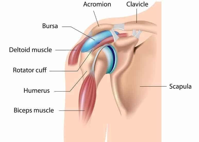 shoulder impingement test - shoulder bursitis
