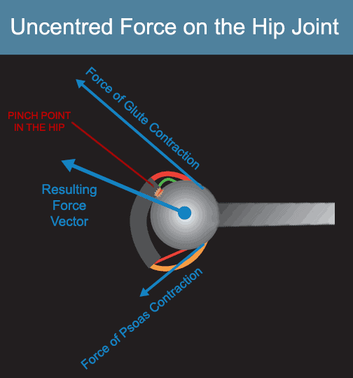 dysfunctional hip internal rotators result in poor hip joint centration