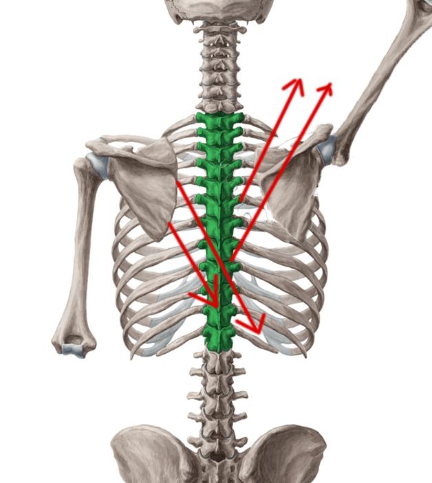 reciprocal-shoulder-motion