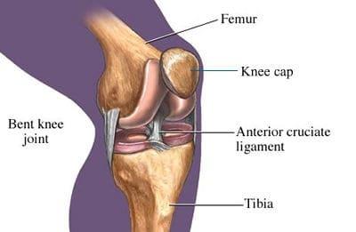 hamstring strengthening anterior curciate ligament