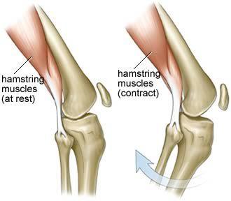 hamstring strengthening hamstring muscles