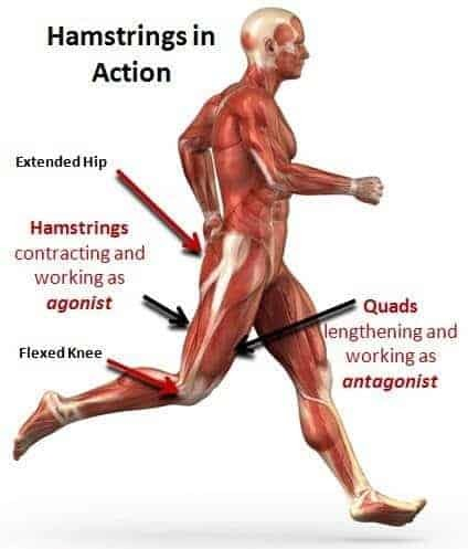 how to stretch tight hamstrings for lasting effects