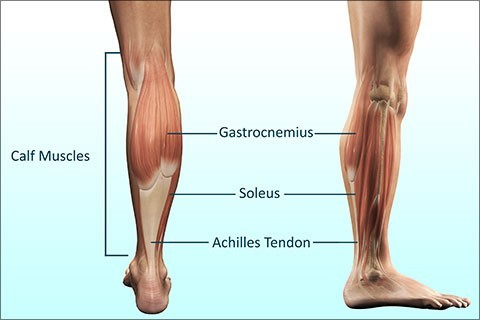 how to stretch calf muscles - anatomy