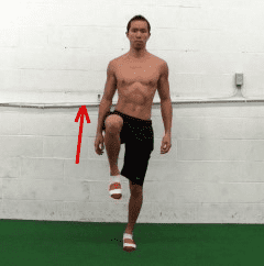 hip flexion - tfl muscle
