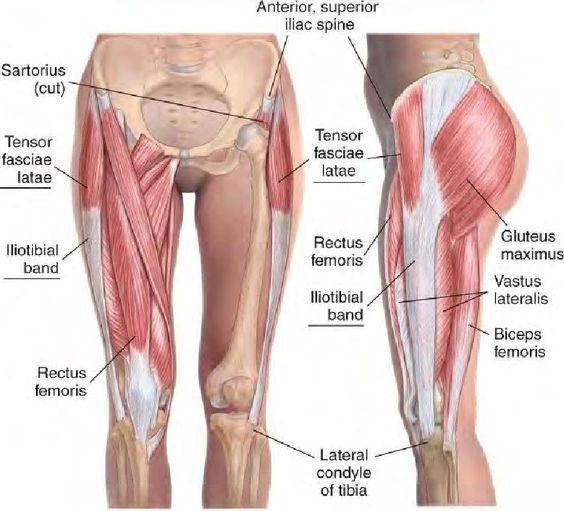 tfl anatomy - tensor fasciae latae stretch
