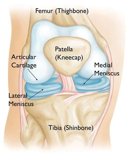 knee anatomy - lateral and medial meniscus tear