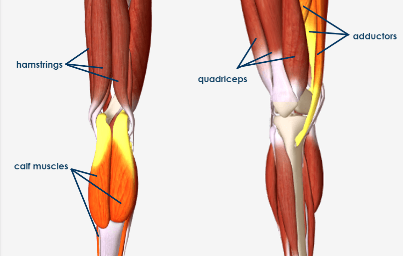 knee muscles - meniscus tear symptoms