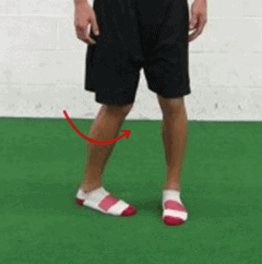 tfl muscle - internal rotation