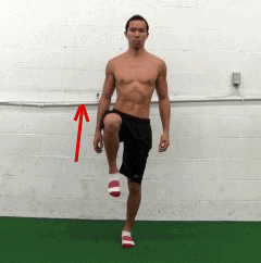 tfl muscle - hip flexion