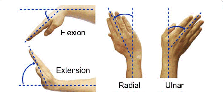 The most well-known movements of your wrist include flexion, or moving your palm toward your forearm and wrist extension, moving the back of your hand toward your forearm.