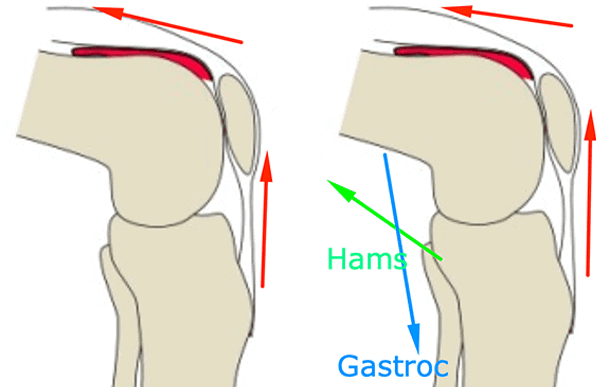 pushing through heels when squatting